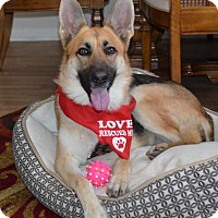 Adopt A Pet :: Mila-Coutesy Post - Burleson, TX