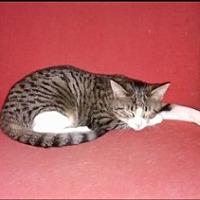 Adopt A Pet :: SAMMY - Bainsville, ON