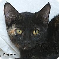 Adopt A Pet :: Cheyenne M - Sacramento, CA