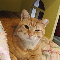 Adopt A Pet :: Basil - Richand, NY