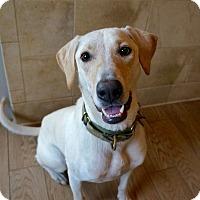Adopt A Pet :: Beau - Myakka City, FL