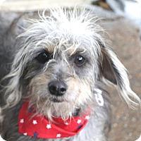 Adopt A Pet :: Felicity - Norwalk, CT