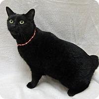 Adopt A Pet :: BOBBIE CAT - Lexington, NC