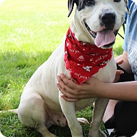 Adopt A Pet :: Nemo - Warrenville, IL