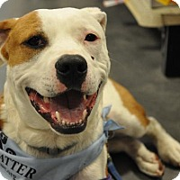 Adopt A Pet :: Atticus Finch - Silver Spring, MD