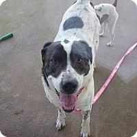 Adopt A Pet :: Speckles - Newport, KY
