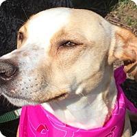 Adopt A Pet :: Bonnie - St Louis, MO
