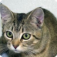 Adopt A Pet :: Lovelina - Republic, WA