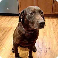 Adopt A Pet :: Charlie - Island Lake, IL