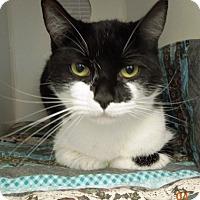 Adopt A Pet :: MIMI - Newport, OR