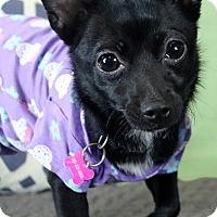 Adopt A Pet :: JUPITER (video) - Los Angeles, CA