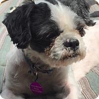Adopt A Pet :: Kevin aka 'Kev' - Rockville, MD
