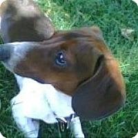 Adopt A Pet :: REBEL - Atascadero, CA