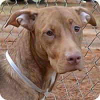 Adopt A Pet :: Gina - Athens, GA