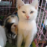 Adopt A Pet :: Rourke and Redmon - Riverside, RI