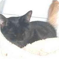 Adopt A Pet :: Muggs - Bedford, MA