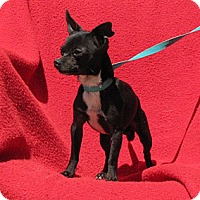 Adopt A Pet :: PeeWee - Oakland, AR