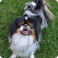 Adopt A Pet :: Bejing - Aurora, CO
