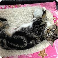 Adopt A Pet :: Precious - Simpsonville, SC