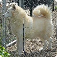 Adopt A Pet :: Avalanche - Prole, IA