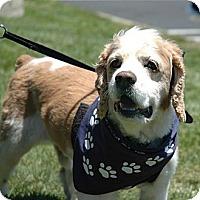 Adopt A Pet :: Morty-ADOPTION PENDING! - Sacramento, CA