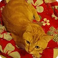 Adopt A Pet :: Milton - Chicago, IL