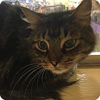Adopt A Pet :: QT - Monroe, GA
