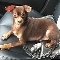 Adopt A Pet :: Max2 - Dallas, TX