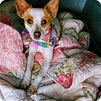 Adopt A Pet :: Ms Tita - San Diego, CA