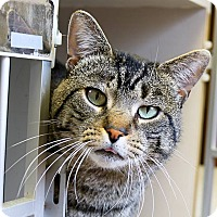 Adopt A Pet :: Mr. Butters - Ann Arbor, MI