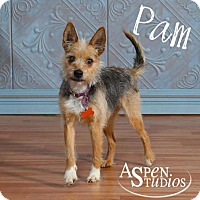 Adopt A Pet :: Pam - Valparaiso, IN