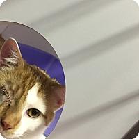 Adopt A Pet :: Ragetti - Goshen, NY
