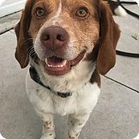 Adopt A Pet :: Hoss - Hanna City, IL