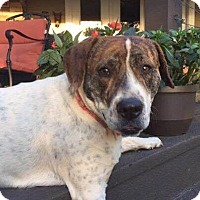 Adopt A Pet :: Ginger - Allentown, NJ