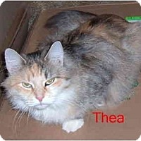 Adopt A Pet :: Thea - Albany, NY