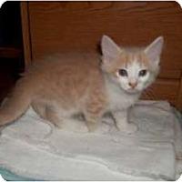Adopt A Pet :: Leopold - Acme, PA