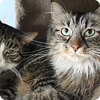 Adopt A Pet :: Baja - Chicago, IL
