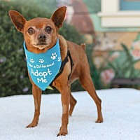Adopt A Pet :: Marlon - Pacific Grove, CA