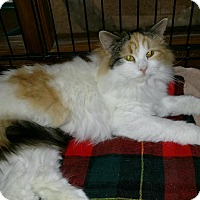 Adopt A Pet :: Morticia - Medina, OH