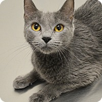 Adopt A Pet :: Candy - Springfield, IL