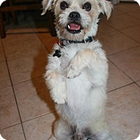 Adopt A Pet :: Van - Jupiter, FL