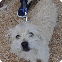 Adopt A Pet :: Alec - Atlanta, GA
