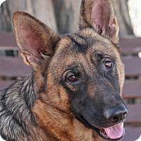 Adopt A Pet :: Harper von Himmel - Los Angeles, CA