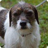 Adopt A Pet :: Cody - Glastonbury, CT