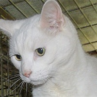 Adopt A Pet :: LIGHTENING - Acme, PA