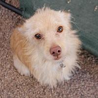 Adopt A Pet :: Noah - Phoenix, AZ