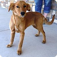 Adopt A Pet :: Bonnie - Artesia, NM