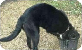 Border Collie Dog for adoption in Tiffin, Ohio - Quincy