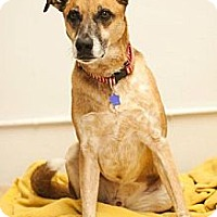Shepherd (Unknown Type) Mix Dog for adoption in Fresno, California - Cassidy
