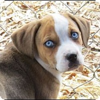 Adopt A Pet :: Jewels - Somers, CT